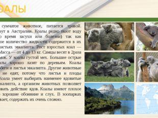 КОАЛЫ Коала— сумчатое животное, питается травой. Коалы живут в Австралии. К