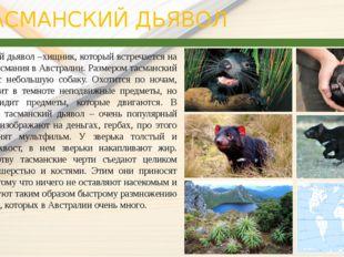 ТАСМАНСКИЙ ДЬЯВОЛ Тасманский дьявол –хищник, который встречается на острове