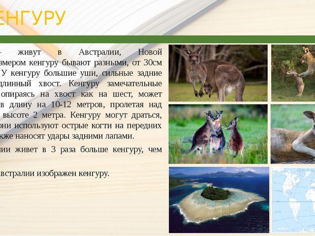 КЕНГУРУ Кенгуру— живут в Австралии, Новой Гвинее.Размером кенгуру бывают р...