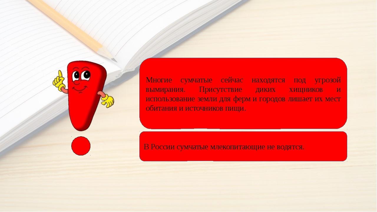 СУМЧАТЫЕ ПОД УГРОЗОЙ В России сумчатые млекопитающие не водятся. Многие сумча...