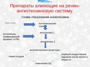 Препараты влияющие на ренин-ангиотензиновую систему. Ренин в почках Схема обр