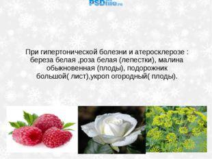 При гипертонической болезни и атеросклерозе : береза белая ,роза белая (лепес