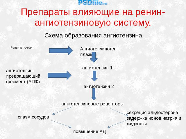 Препараты влияющие на ренин-ангиотензиновую систему. Ренин в почках Схема обр...