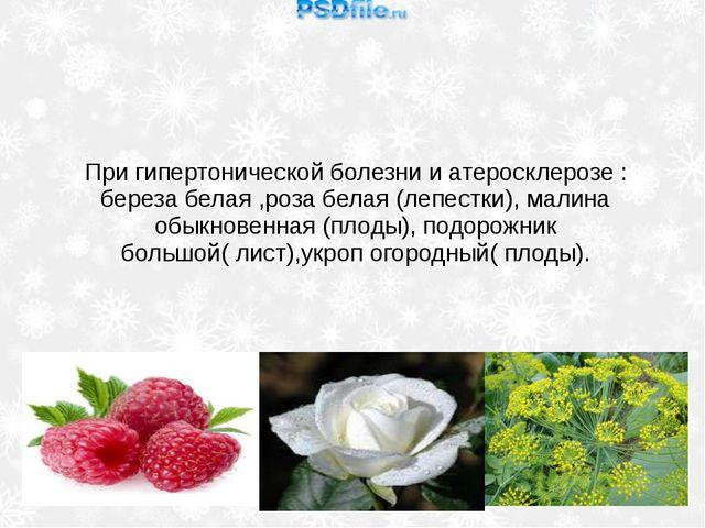 При гипертонической болезни и атеросклерозе : береза белая ,роза белая (лепес...
