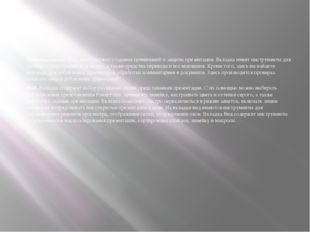 Рецензирование. Вкладка содержит создания примечаний и защиты презентации. В