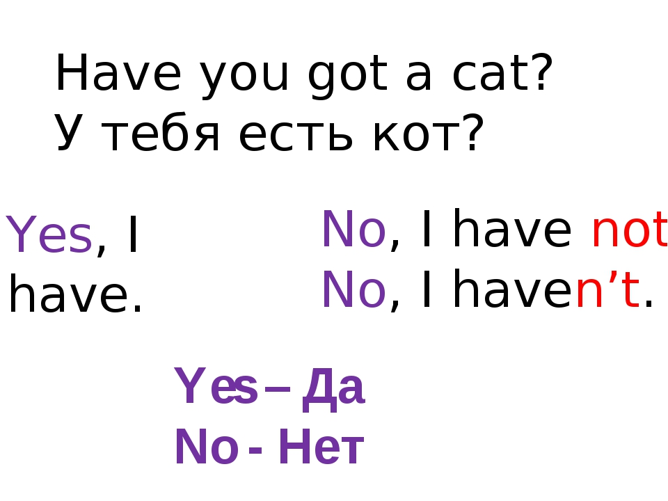 Have you got a cat? У тебя есть кот? Yes, I have. No, I have not. No, I haven...