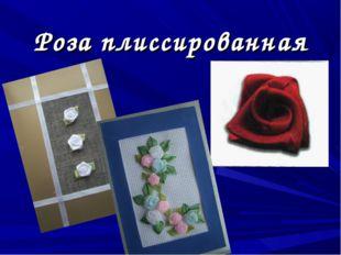 Роза плиссированная