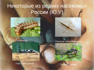 Некоторые из редких насекомых России (Ю.У) Поликсена Ранатра палочковидная Ус