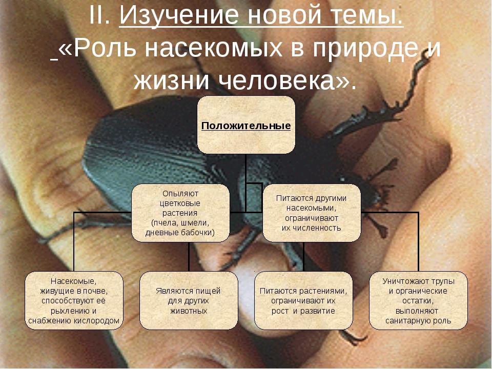 II. Изучение новой темы. «Роль насекомых в природе и жизни человека».