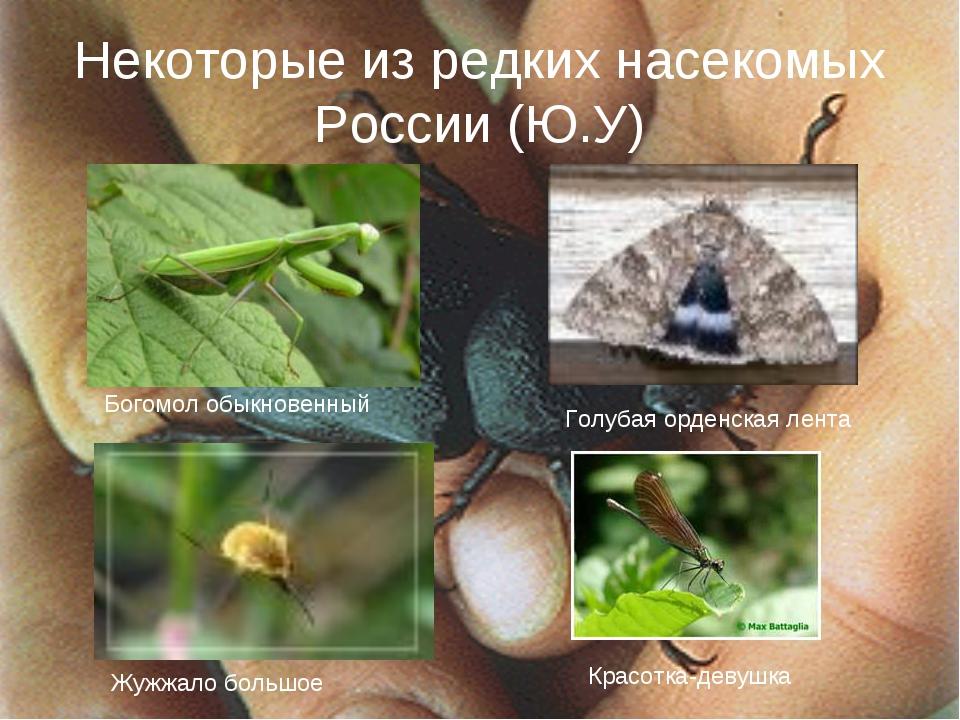Некоторые из редких насекомых России (Ю.У) Богомол обыкновенный Голубая орден...