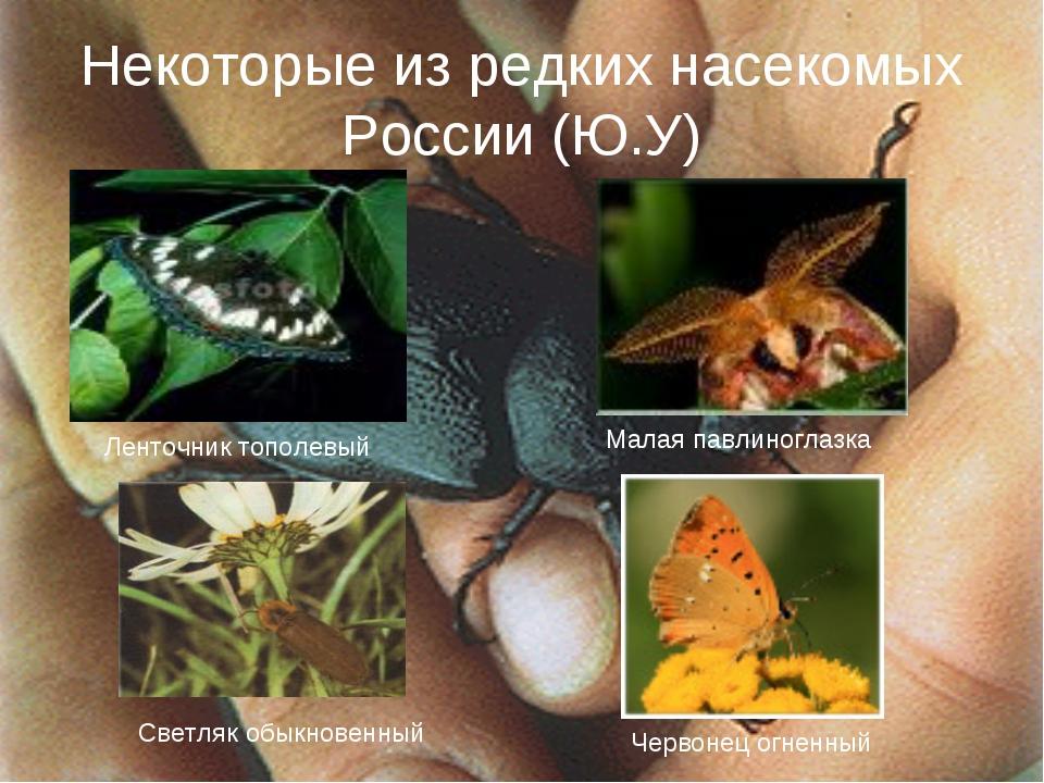 Некоторые из редких насекомых России (Ю.У) Ленточник тополевый Малая павлиног...