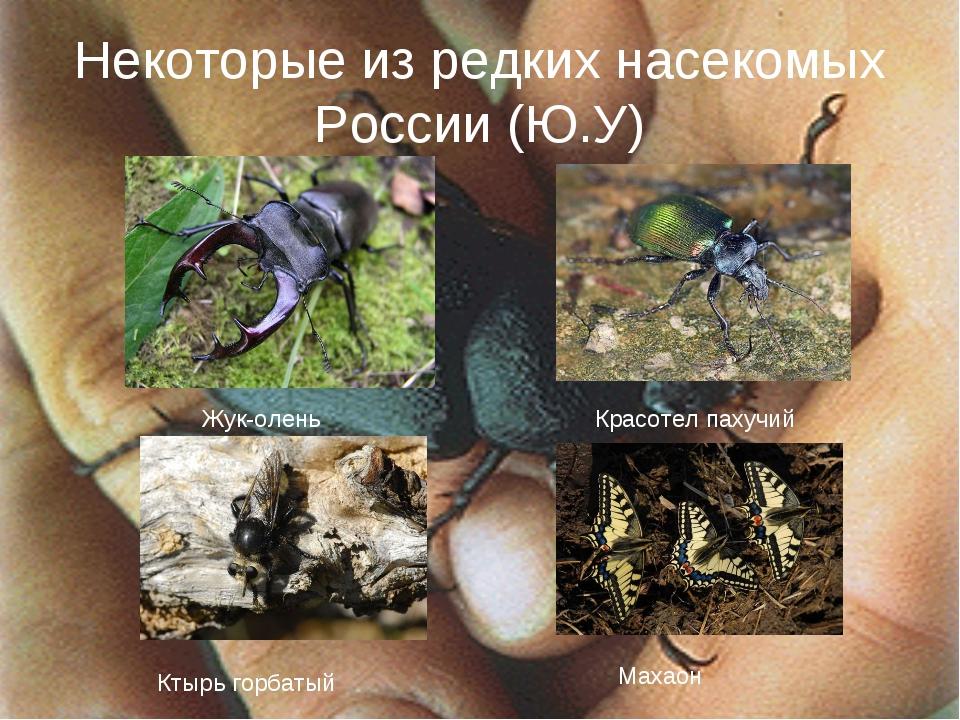 Некоторые из редких насекомых России (Ю.У) Жук-олень Красотел пахучий Ктырь г...