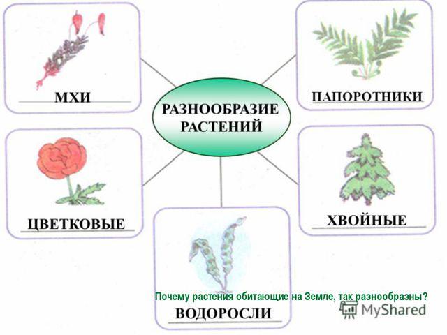 Почему растения обитающие на Земле, так разнообразны?