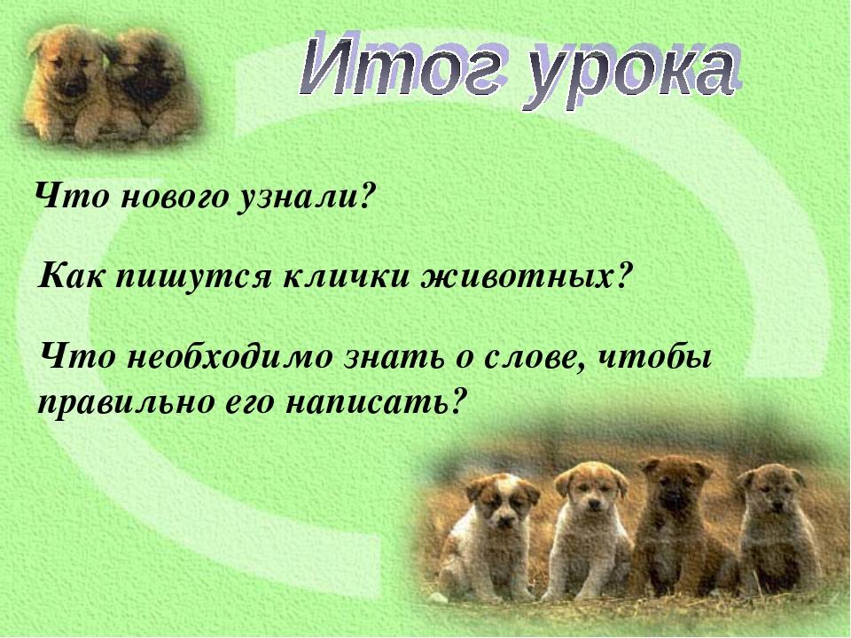 Что нового узнали? Как пишутся клички животных? Что необходимо знать о слове,...