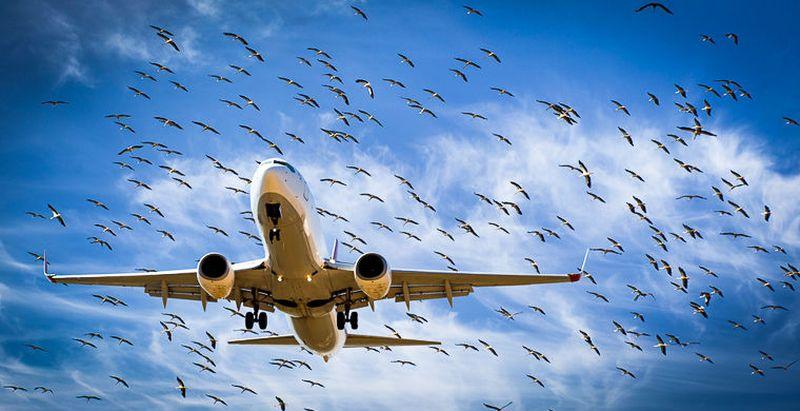 http://aeronavtika.com/images/2015/April/Foto/Cin/Brd.jpg