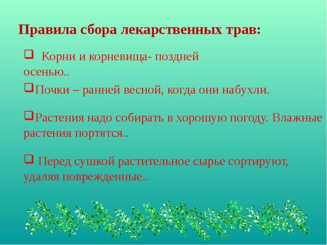 Правила сбора лекарственных трав: Корни и корневища- поздней осенью.. Почки –...