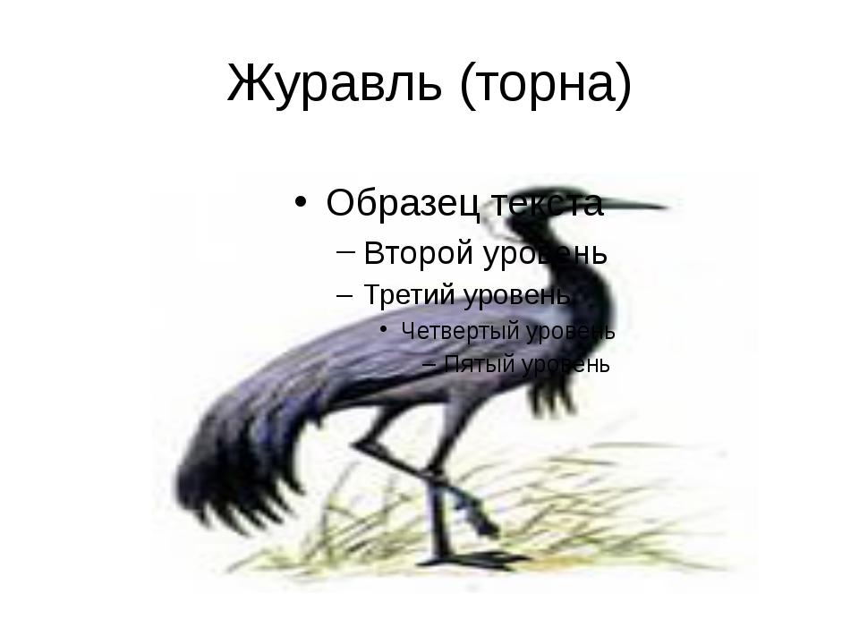 Журавль (торна)