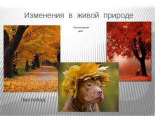 Изменения в живой природе Листопад Листва меняет цвет