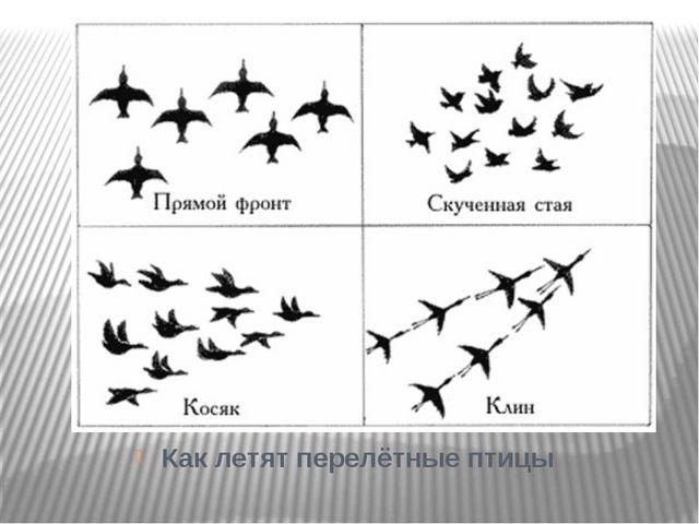 Как летят перелётные птицы