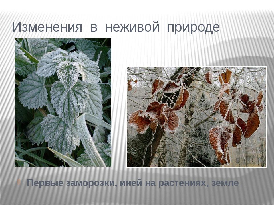 Изменения в неживой природе Первые заморозки, иней на растениях, земле