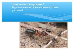 Чем питаются муравьи? Муравьи питаются насекомыми, соком растений