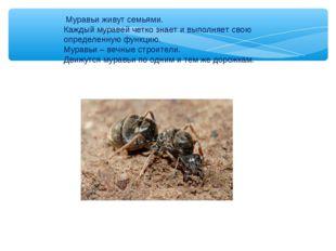Муравьи живут семьями. Каждый муравей четко знает и выполняет свою определен