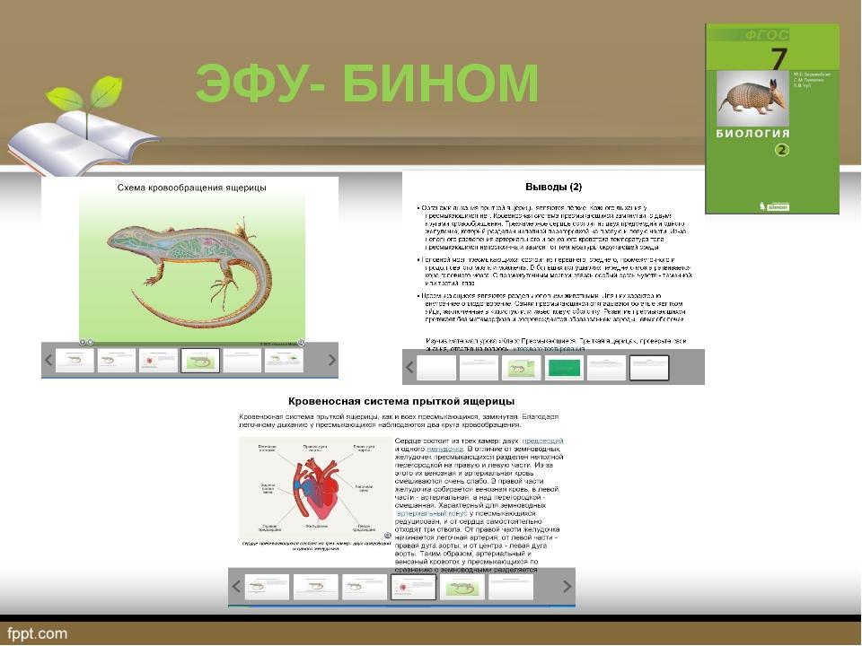 ЭФУ- БИНОМ