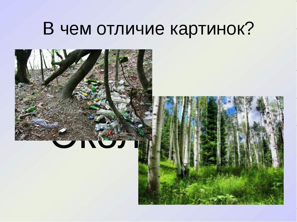 В чем отличие картинок? Экология
