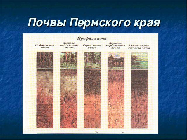 Почвы Пермского края