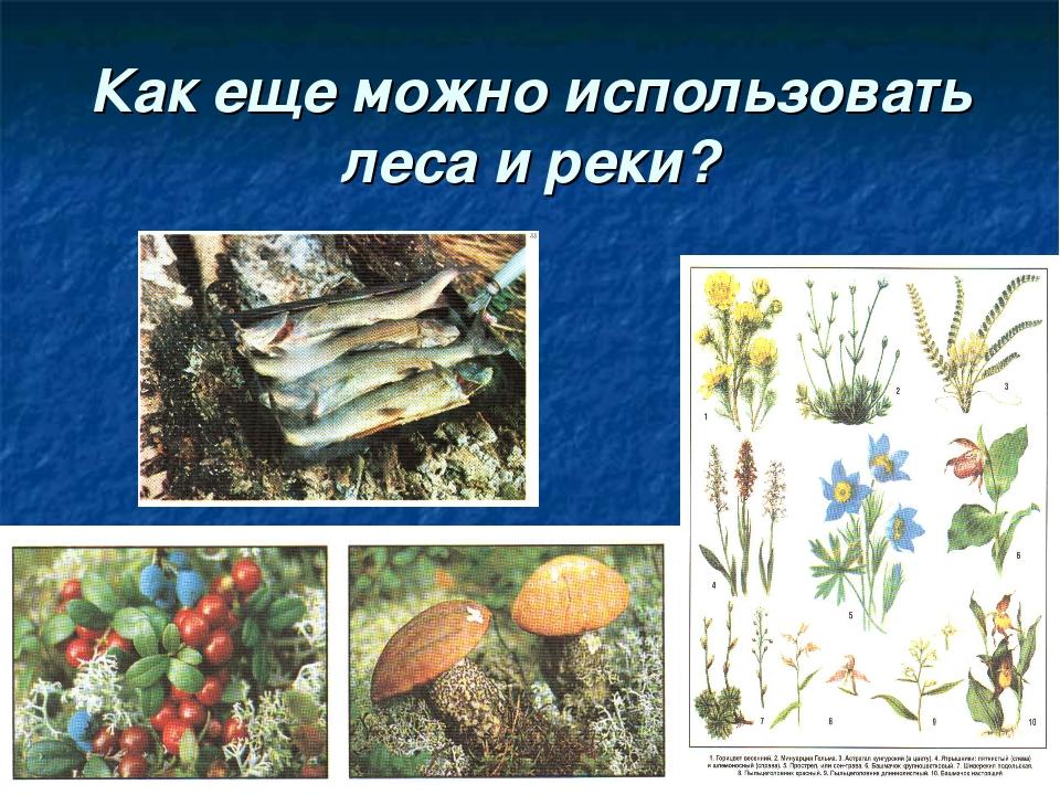 Как еще можно использовать леса и реки?