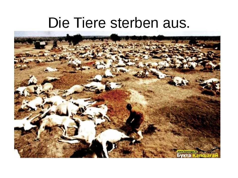 Die Tiere sterben aus.
