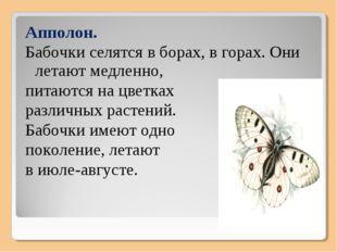 Апполон. Бабочки селятся в борах, в горах. Они летают медленно, питаются на ц