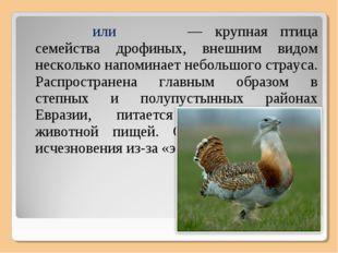 Дрофа́, или дуда́к — крупная птица семейства дрофиных, внешним видом нескольк