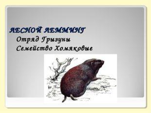 ЛЕСНОЙ ЛЕММИНГ  Отряд Грызуны  Семейство Хомяковые