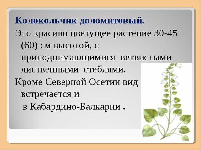 Колокольчик доломитовый. Это красиво цветущее растение 30-45 (60) см высотой,...