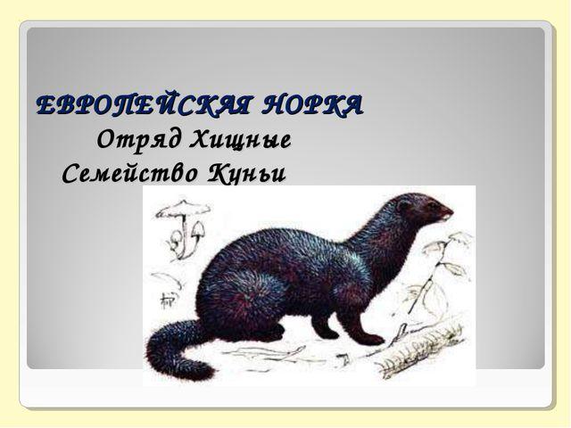 ЕВРОПЕЙСКАЯ НОРКА   Отряд Хищные  Семейство Куньи