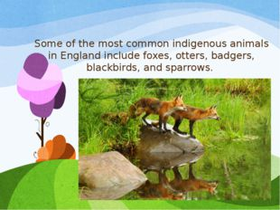 Some of the most common indigenous animals in England include foxes, otters,