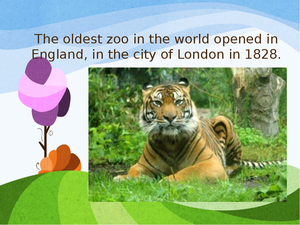 The oldest zoo in the world opened in England, in the city of London in 1828.
