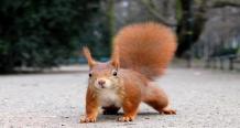 http://gogowall.ru/wall/10/squirrel_belka_ulica_1600x1200.jpg