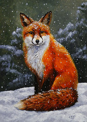 http://render.fineartamerica.com/images/images-print-search/images-medium-5/snow-fox-crista-forest.jpg