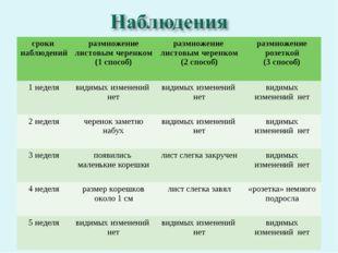 сроки наблюденийразмножение листовым черенком (1 способ)размножение листовы