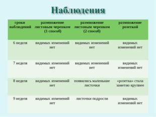 сроки наблюденийразмножение листовым черенком (1 способ) размножение листов