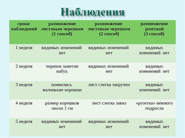 сроки наблюденийразмножение листовым черенком (1 способ)размножение листовы...