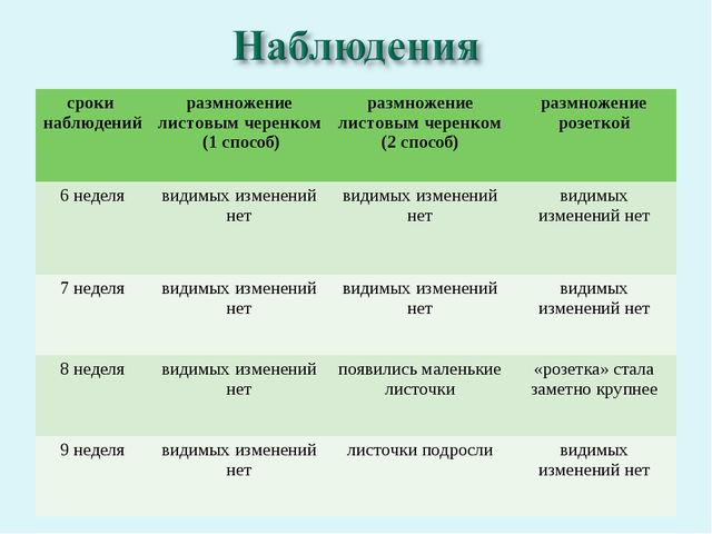 сроки наблюденийразмножение листовым черенком (1 способ) размножение листов...