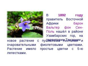 новое растение с пушистыми листьями и очаровательными фиолетовыми цветками. Р