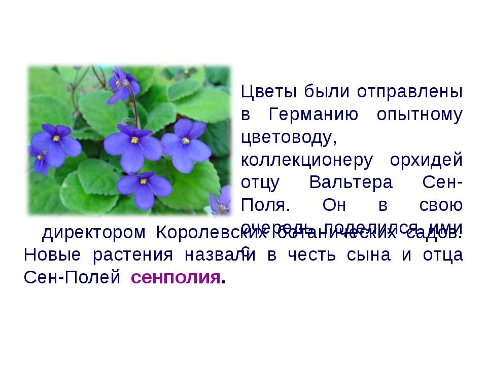 директором Королевских ботанических садов. Новые растения назвали в честь сы...