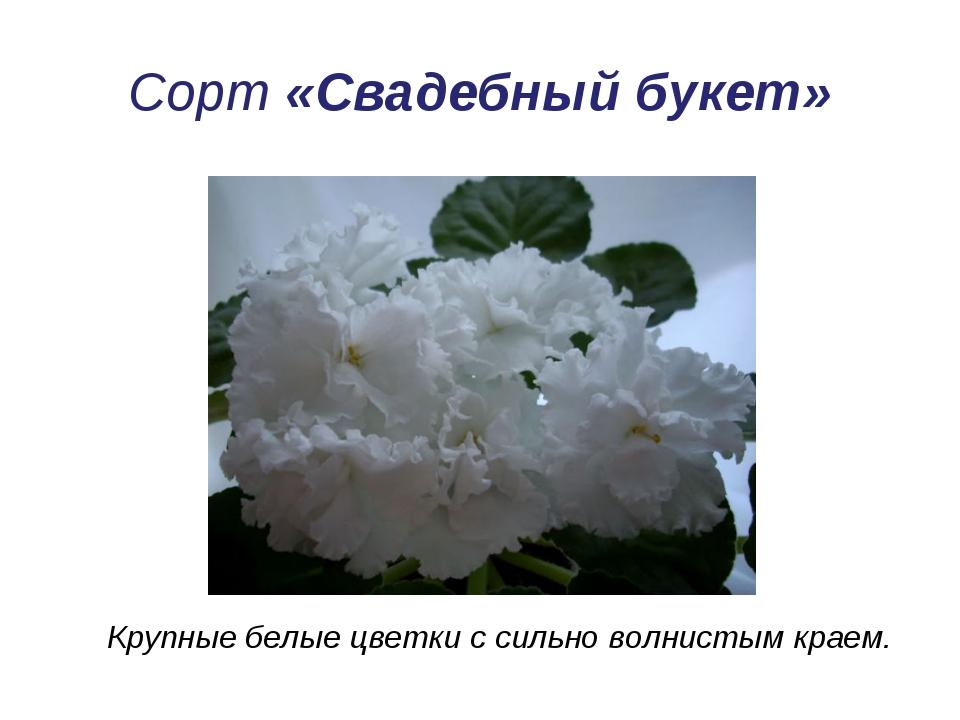 Сорт «Свадебный букет» Крупные белые цветки с сильно волнистым краем.
