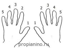 Нумерация пальцев у музыкантов