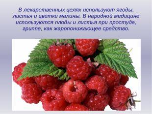 В лекарственных целях используют ягоды, листья и цветки малины. В народной ме