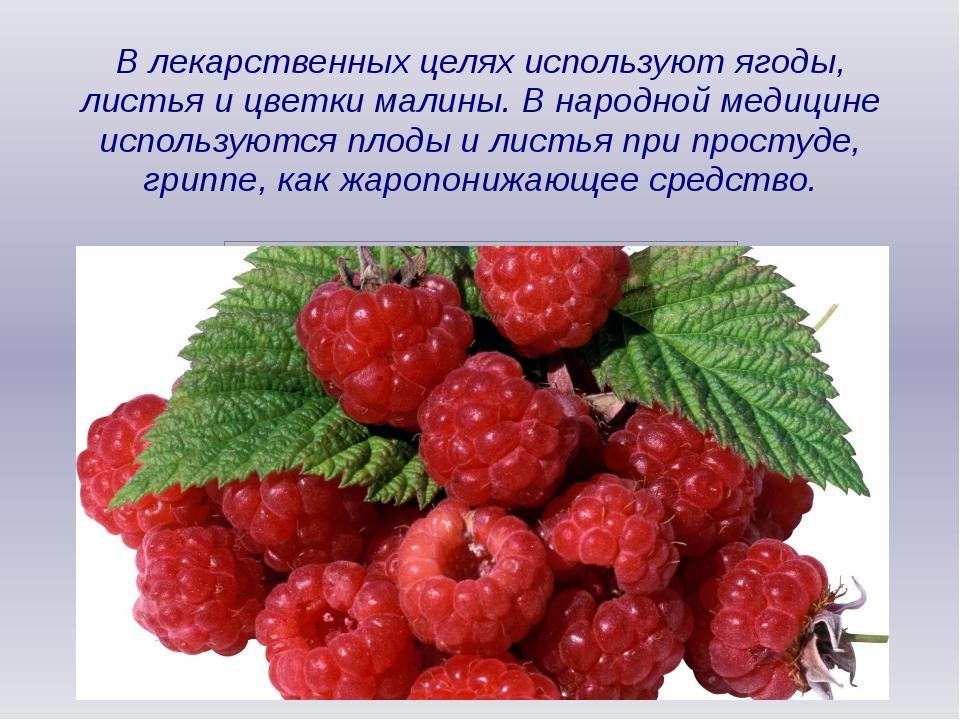 В лекарственных целях используют ягоды, листья и цветки малины. В народной ме...